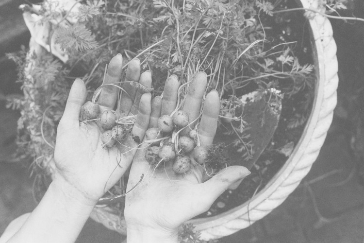 gardening, photography