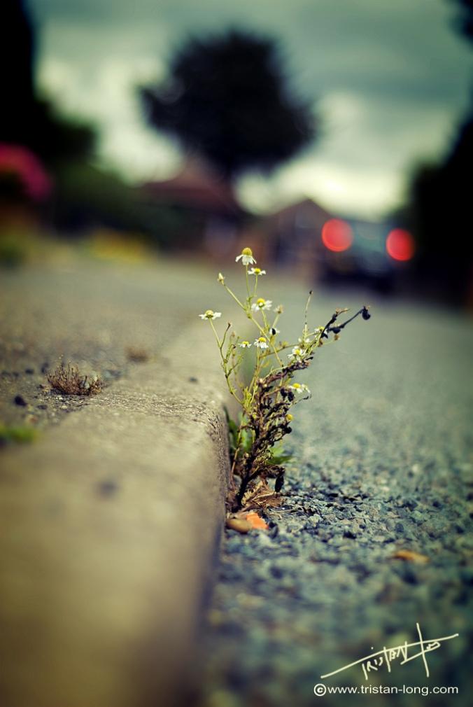 flower in concrete