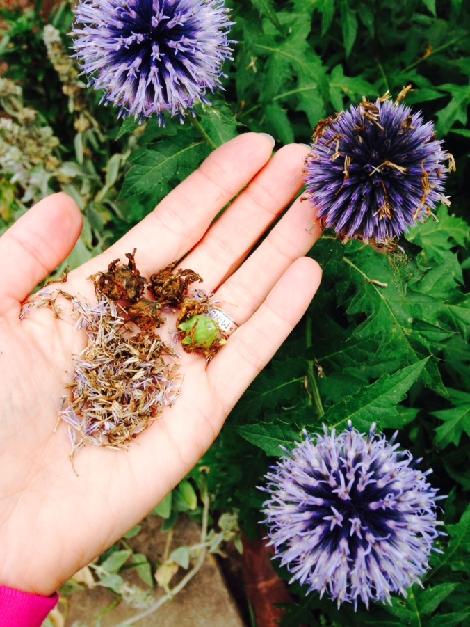 saving-flower-seeds
