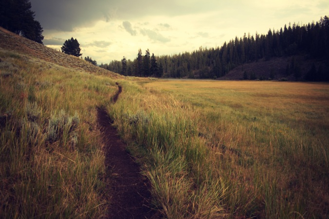 narrow-path-pasture