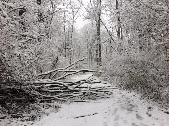 fallen-tree-snow